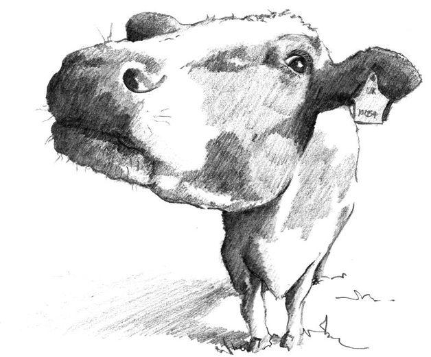photo: http://radostar.com/creatives/stephband/works/two-cows-181/